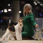Petra Wagenknecht Fox Terrier