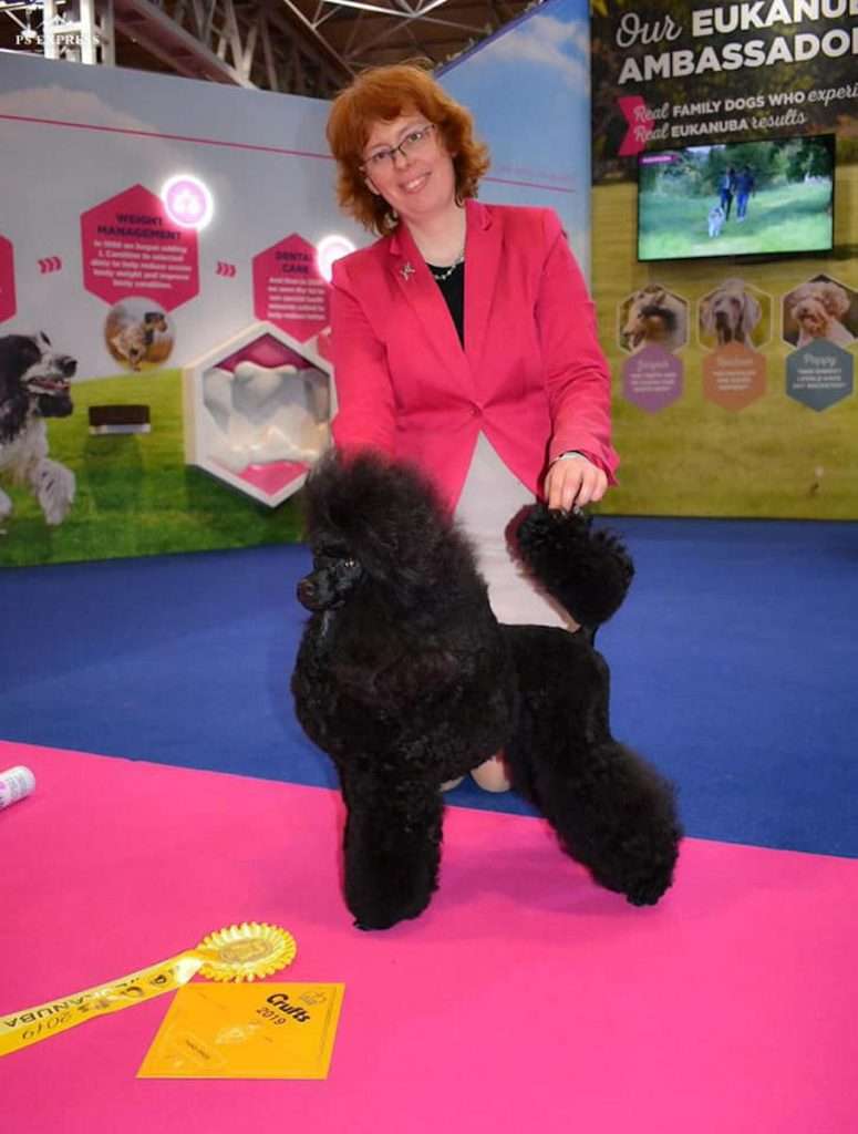 Crufts2019 Miniature Poodle Yearling